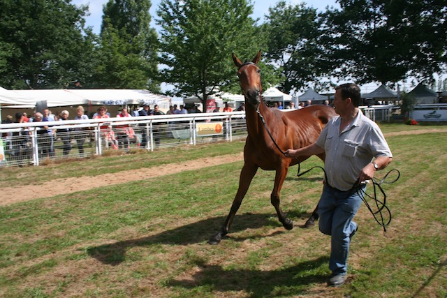 2015 Ambiance Chaser Day Paray-Le-Monial