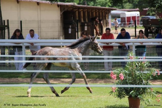 2017 Concours de Paray-le-Monial, Ambiances